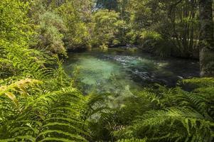 Die Waikoropupu-Quellen, Neuseeland foto