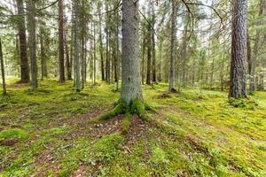 Bäume im grünen Wald mit Moos- und Herbstfarben