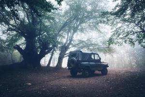 Herbstwald im Nebel. schöne Naturlandschaft. Vintage-Stil foto