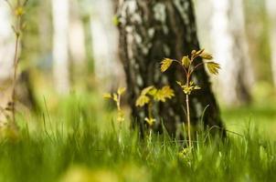 Frühlingsatmosphäre foto