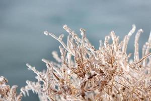 Eiszapfen auf einem Baum foto
