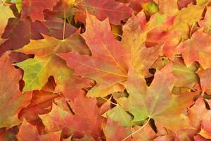 Hintergrund der Herbstblätter foto