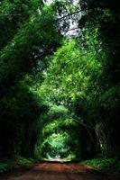 Straße mit Bambus