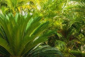 exotische Palmen Beach Resort Gelände. schöne Palme in tropischen foto