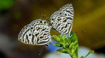 kleine Schmetterlinge foto