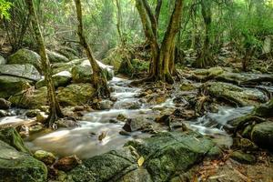 Wasserfall und Regenwald foto