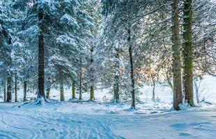 Winterlandschaft mit Bäumen in der Nähe von Holz foto