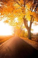 Herbstgasse foto