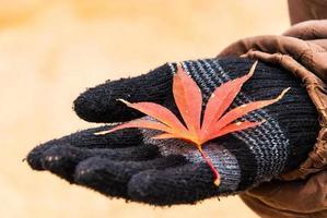 Herbstlaub auf schwarzem Handschuh