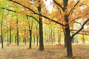 Herbstpark mit Eichen und Ahorn in gelben Bäumen foto