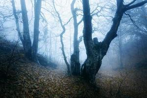 Spur durch einen mysteriösen dunklen alten Wald im Nebel. Herbst foto