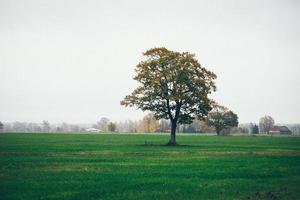 grünes Feld mit Bäumen auf dem Land. Retro körniger Film foto