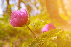 wilde Blumen bei Sonnenuntergang foto