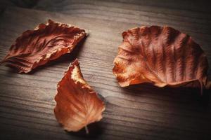 Herbstlaub auf Holz foto