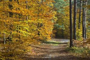 Wald in den schönen Herbstfarben an einem sonnigen Tag