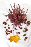Herbst Naturkonzept. die Blätter, Heideblüten und Kastanien