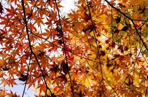 helle Herbstblätter in der natürlichen Umgebung foto