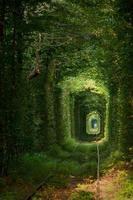 grüner tunne foto
