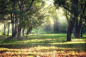 Lichtung im Herbstpark von der Sonne beleuchtet