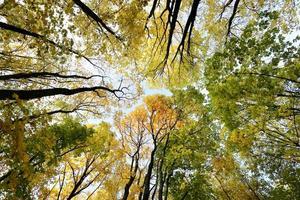 Hintergrund Herbstbäume foto