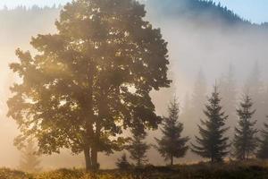 majestätische Gebirgslandschaft mit frischen grünen Blättern foto