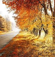 Herbst. fallen. herbstlicher Park. Herbstbäume und Blätter foto