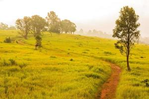 grüne wiese, khao yai nationalpark thailand foto