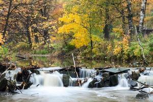 goldener Wald mit fließendem Flusswasser durch Steine im Herbst