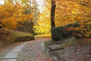 Herbstsaison im Park