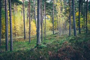 bunte Herbstbäume im grünen Wald mit Sonnenstrahlen. retro
