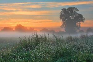 neblige Morgendämmerung Herbstmorgen foto