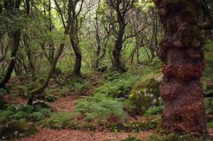 Levada von Madeira. Portugal foto