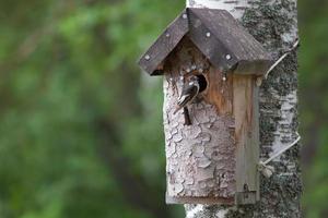 handgemachtes Vogelhaus und ein kleiner Vogel foto