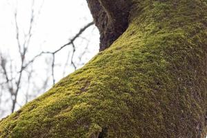 weiches grünes Moos auf Baum foto