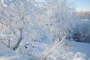 Bäume mit Raureif bedeckt foto