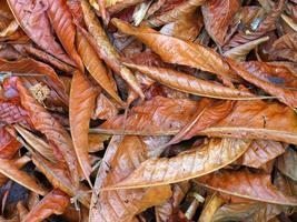 trockene Blätter foto