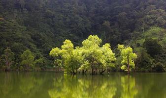 grüne Bäume im Wasser am See foto