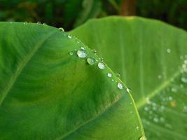 Morgens fällt Wasser auf die Blätter foto