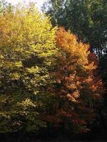 """""""wie der Künstler die Bäume gemalt hat"""" - Farben des Herbstes"""
