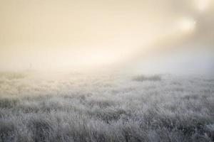 Atemberaubende Sonnenstrahlen erhellen den Nebel im Herbst