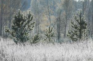 Frost auf den Bäumen und Gras, fallen in allen Farben