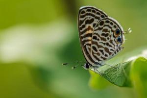 Schmetterling auf grünem Blatt