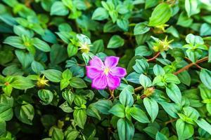 rosa Blume grüner Blatthintergrund foto