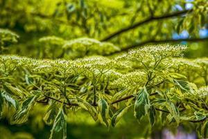 grüne Sträucher und kleine Blumen auf einem grünen Hintergrund foto