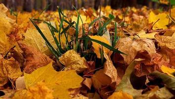 helle Farben Herbstbäume. Herbstlandschaft.