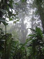Costa Rica Regenwald