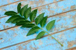 naturfrisches neem auf altblauem holz foto