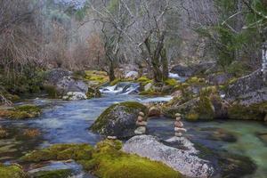 Schönheit der Natur foto