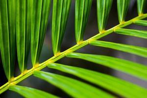 Nahaufnahme der grünen Blattstruktur (Schärfentiefe) foto