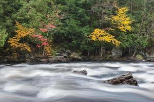 bunter Herbstwald an einem Flussufer des Ochsenzungenflusses mit gefrorener Bewegung